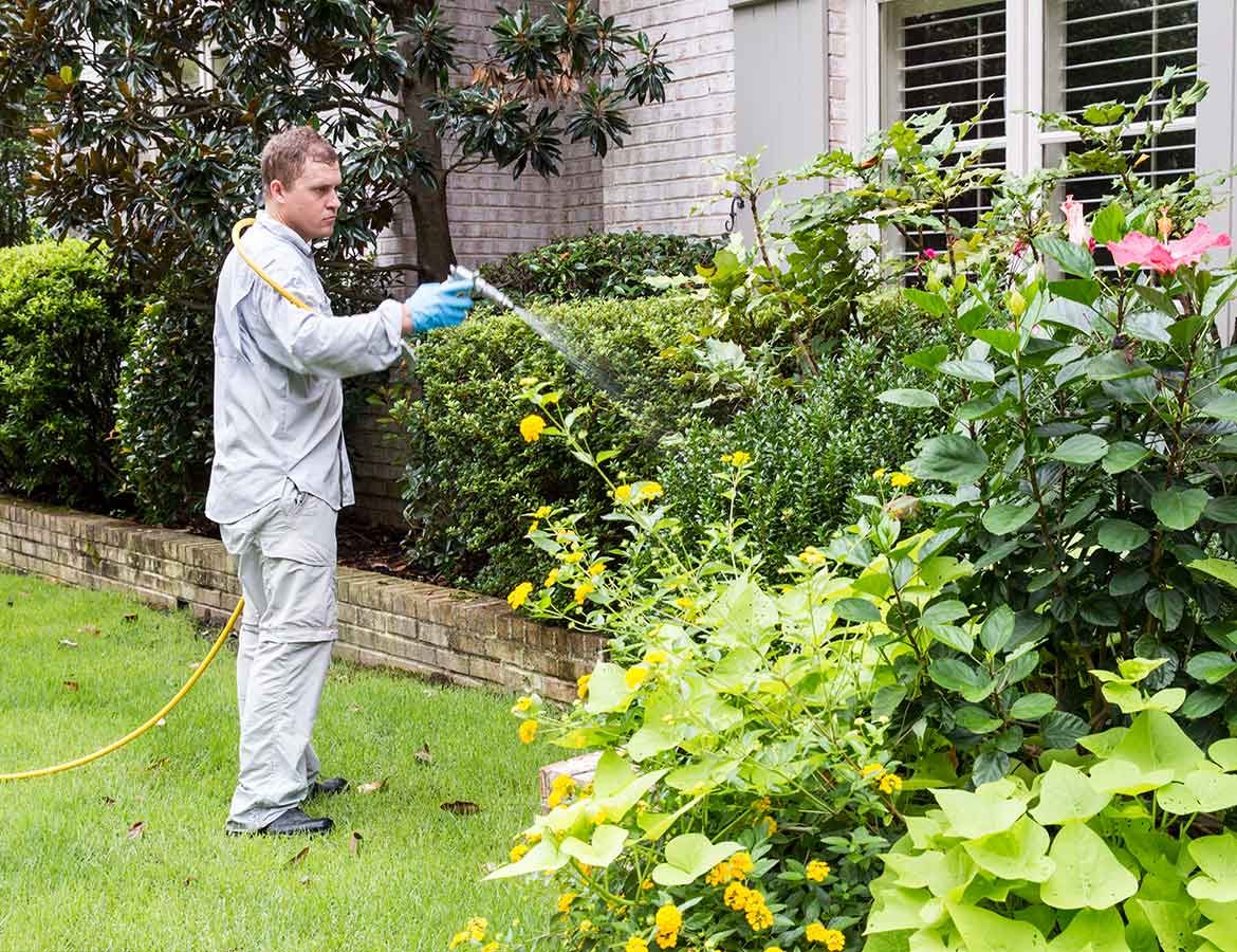 Shrub Care 3